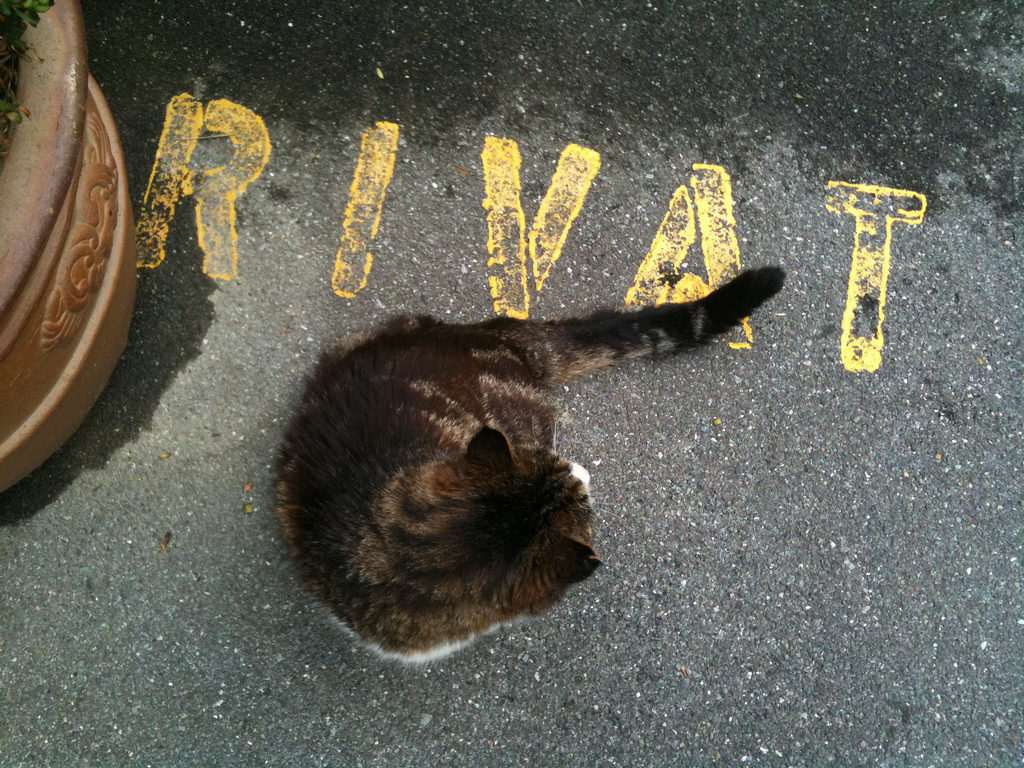 Private cat